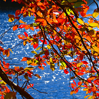 Fall leaves Newburyport